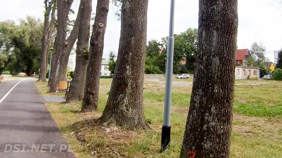 Ktoś uśmierca drzewa. Sprawy wykryte w Drawsku i Czaplinku.