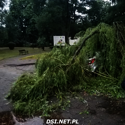 Drzewo zwaliło się na samochód