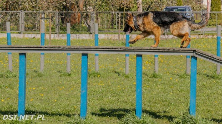 Wybieg dla psów w Drawsku Pomorskim
