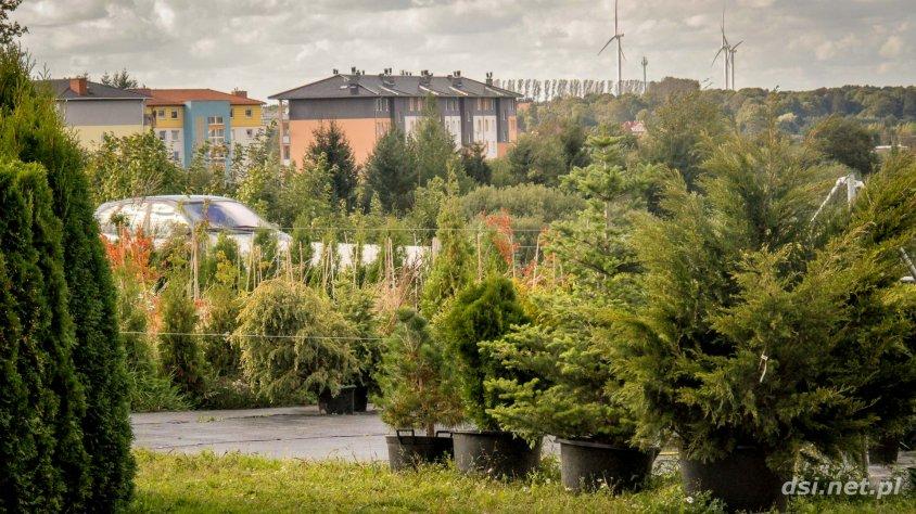 Szkółka Drzew i Krzewów Ozdobnych w Drawsku Pomorskim