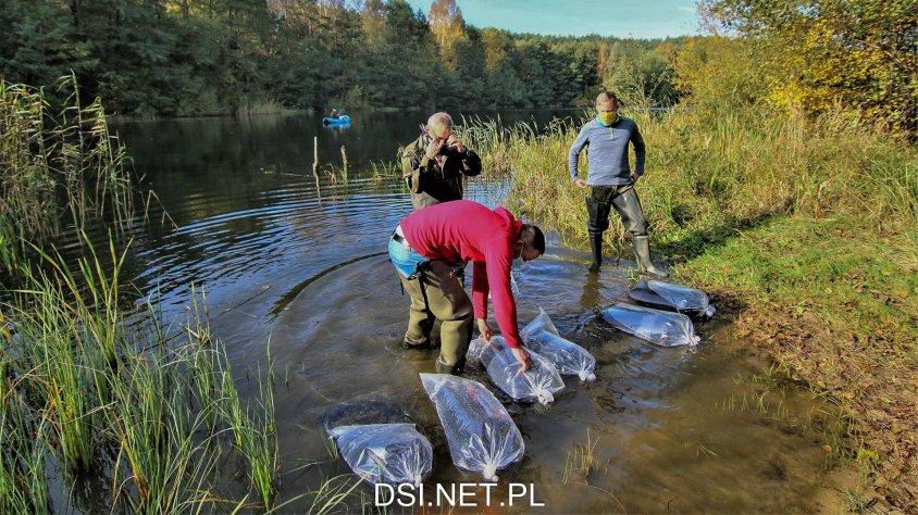 Zarybianie: Do jeziora trafiło sporo kroczka linka i karasia