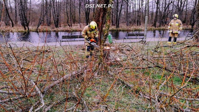 Wycinka drzew i krzaków przy starej stanicy w Złocieńcu
