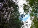 Spaliło się pół hektara lasu w okolicach miejscowości Studniczka