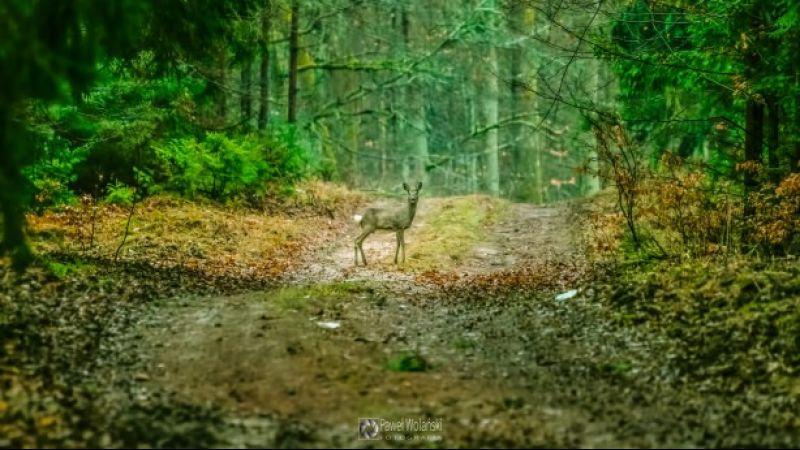 Niezwykłe spotkanie fotografa z naturą