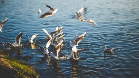 Woliński Park Narodowy – niezwykle miejsce na Pomorzu Zachodnim
