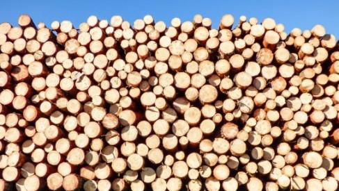 Do Zakładu Przemysłu Drzewnego w Kaliszu Pomorskim trafi maszyna za 8,5 mln zł