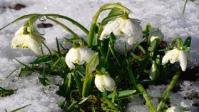 Zima to najlepszy czas na planowanie zmian w ogrodzie