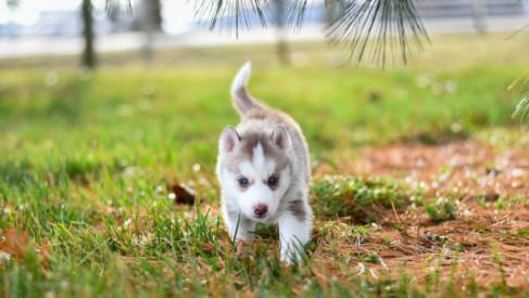 Długie spacery ze szczeniakiem - zadbaj o jego wygodę