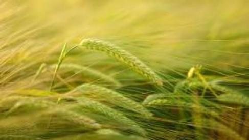 Dla młodych rolników. Do pozyskania jest nawet 150 tys. zł