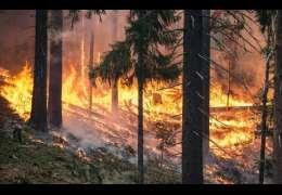 Jest najwyższy stopień zagrożenia pożarowego: Drawskie Nadleśnictwo ostrzega