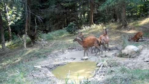 Magiczne ujęcia w lasach w pobliżu Sośnicy - video