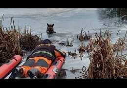 Dzisiaj strażacy uratowali psa, który wpadł do wody z lodu. Wczoraj nie było tyle szczęścia