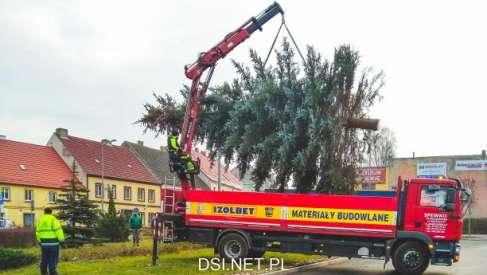 Trzy duże drzewka świąteczne stanęły w Czaplinku. Zobacz zdjęcia