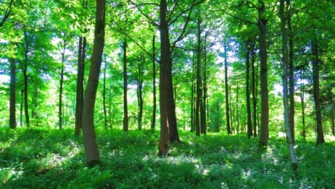 Podatek leśny - jak go obliczyć i kto jest zwolniony z opłaty?